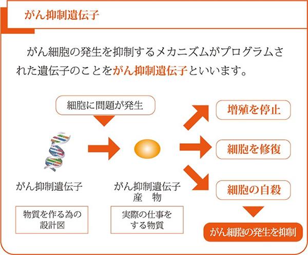 がん抑制遺伝子